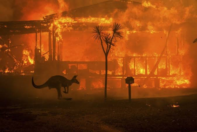 Australia Fires Update - How Can I Help & Donate?